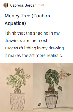 Jordan Cabrera, Monkey Tree, Pachira aquatica. I think that the shading in my drawings are the most successful thing in my drawing. It makes the art more realistic. Drawing of potted monkey trees.