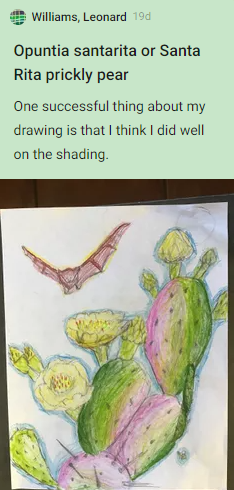 Leonard Williams, opuntia santarita or Santa Rita prickly pear. One successful thing about my drawing is that I think I did well on the shading. Drawing of blooming prickly pear with pollinating bat visiting the flower.