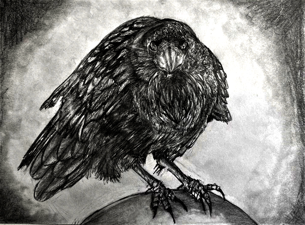 A realistic and dramatic graphite drawing of a raven looking straight towards the viewer